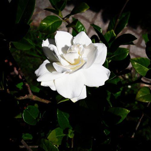 Bocciolo di fiore
