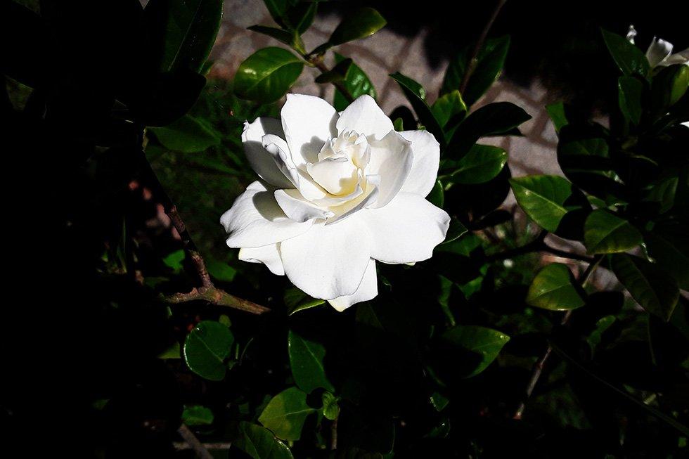 InEssenza - Agnese Anselmi - Bocciolo di fiore